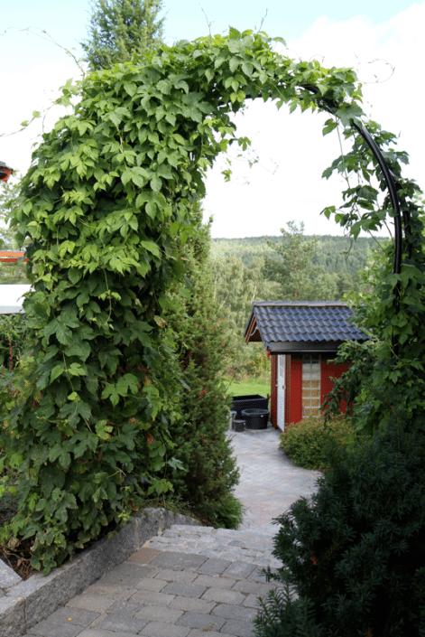 Hagedesign og planlegging hagespesialisten for Planter til koidam